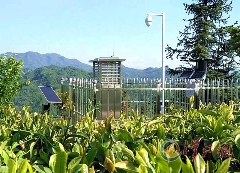 汉家刘氏茶:智慧农业云服务平台助力茶叶品质提升